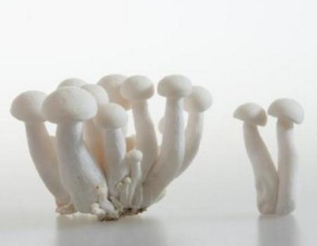 蘑菇营养 抗疾病又提高免疫力的蘑菇5大功效